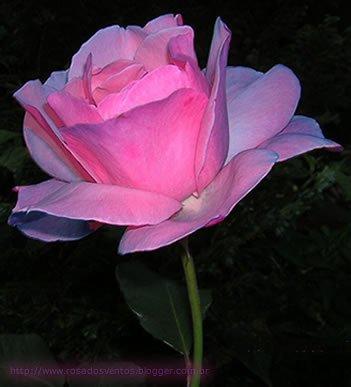 Flores Mais Lindas Do Mundo Avaré Guia Avaré Guia