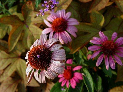 flores do jardim kboing:FLORES KBOING :: Avaré – Guia Avaré Guia Oficial da Cidade de Avaré