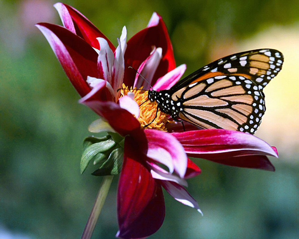 Resultado de imagem para flores e borboletas